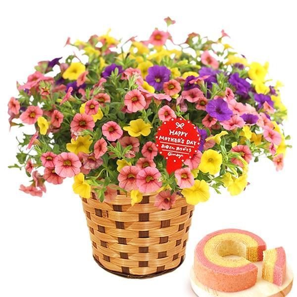 母の日 ギフト 花 母の日 プレゼント 花とスイーツ 2020 ギフトランキング 紫陽花 アジサイ バラ 鉢植え お菓子|oimoya|30
