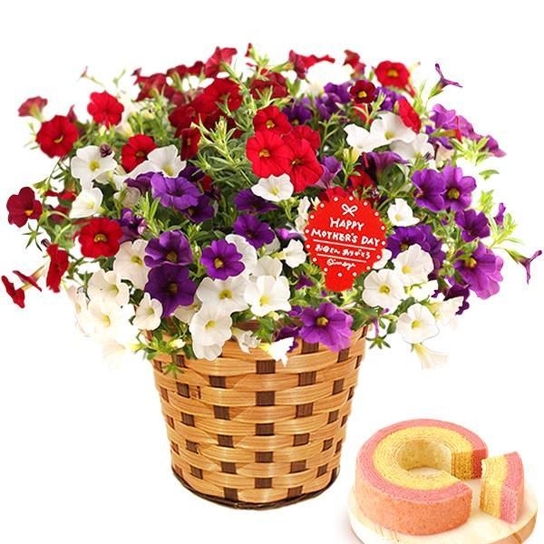 母の日 ギフト 花 母の日 プレゼント 花とスイーツ 2020 ギフトランキング 紫陽花 アジサイ バラ 鉢植え お菓子|oimoya|31