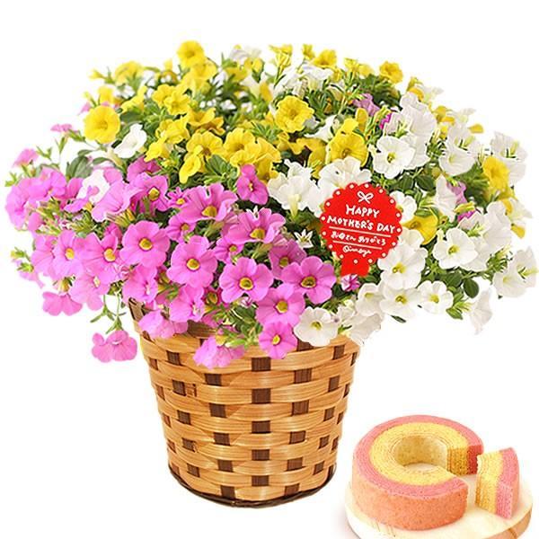 母の日 ギフト 花 母の日 プレゼント 花とスイーツ 2020 ギフトランキング 紫陽花 アジサイ バラ 鉢植え お菓子|oimoya|29