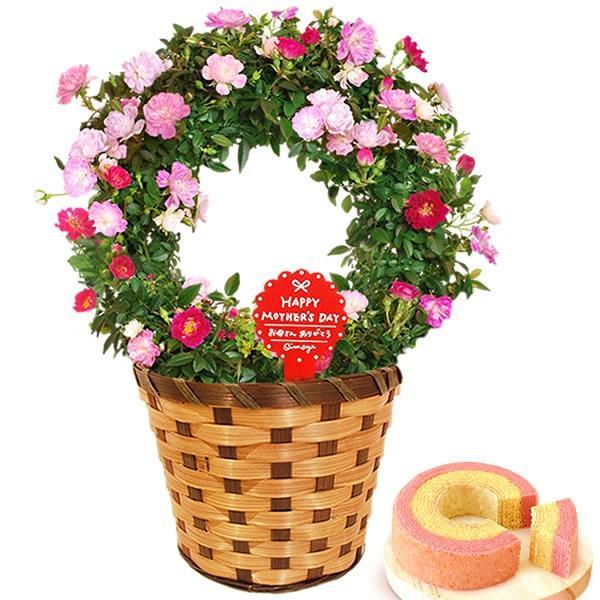 母の日 ギフト 花 母の日 プレゼント 花とスイーツ 2020 ギフトランキング 紫陽花 アジサイ バラ 鉢植え お菓子|oimoya|26