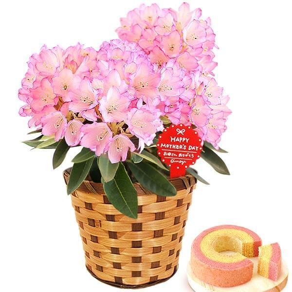 母の日 ギフト 花 母の日 プレゼント 花とスイーツ 2020 ギフトランキング 紫陽花 アジサイ バラ 鉢植え お菓子|oimoya|28