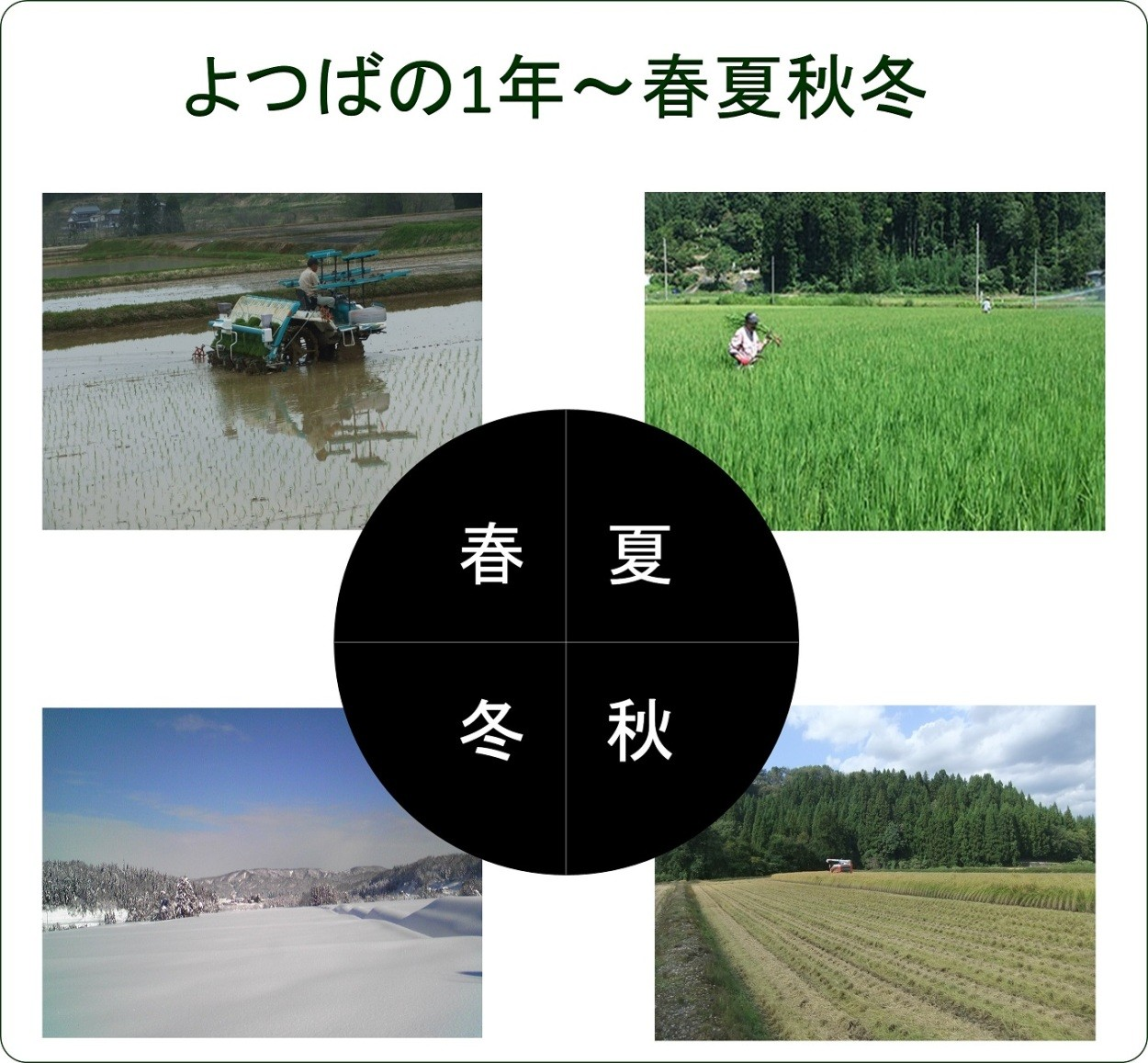 新潟産コシヒカリ 春夏秋冬