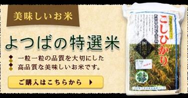 新潟県産コシヒカリ よつばの特選米 大粒