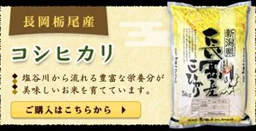 新潟産コシヒカリ 長岡栃尾産コシヒカリ 一等米