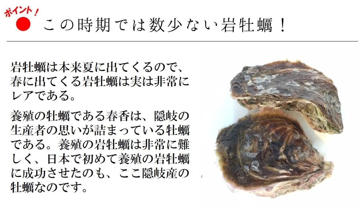 岩牡蠣 春香