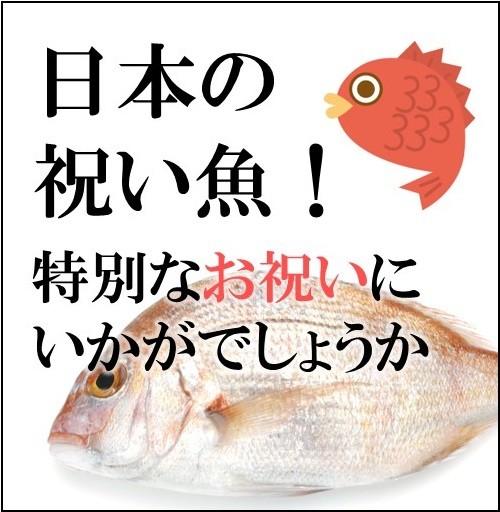 日本の祝い魚