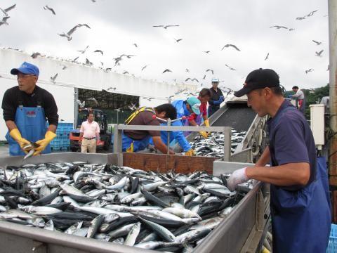 豊富な漁場の女川港