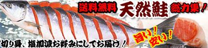 北海道からお取り寄せ、今年最後の北洋流し網漁もの、北洋紅鮭粗塩造り。切り身も売れてます!