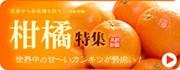 国産の柑橘特集