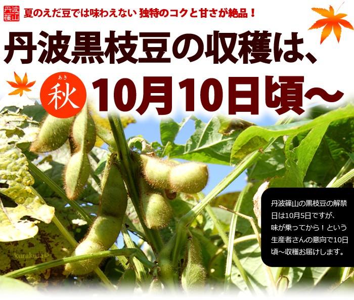 丹波黒枝豆の収穫は10月10日頃から