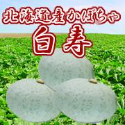 北海道産かぼちゃ「白寿南瓜」