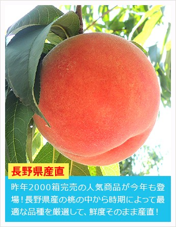 長野県産もぎたて桃 約2kg