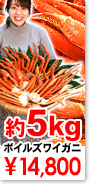 ズワイガニ 約5kg