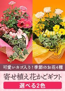 寄せ植え花かごギフト