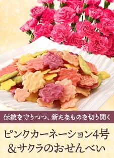 ピンクカーネーションと春の花咲くおせんべい