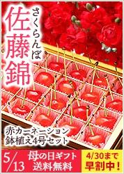 赤カーネーション4号&さくらんぼ(佐藤錦)