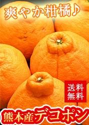 熊本県産「デコポン」2.5kg