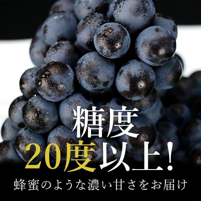 とても甘いブドウとして、最近人気の品種『スチューベン』。その糖度はなんと20度以上!酸味が少なく、蜂蜜のように濃厚な甘味が特徴的です。