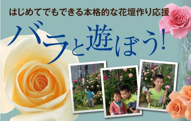 はじめてでもできる本格的な花壇作りを応援
