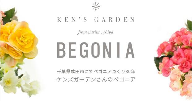 ベゴニア作り30年。ケンズガーデンさんのベゴニア