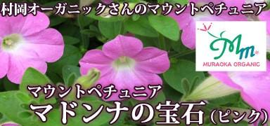 ペチュニア マドンナの宝石(ピンク)