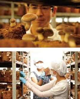 安心・安全な菌床栽培
