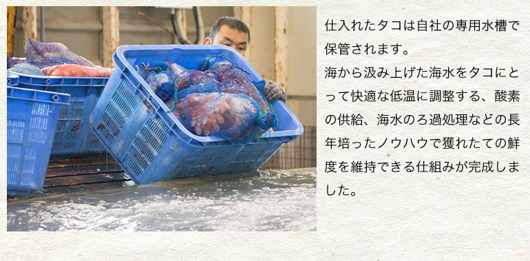活たこ 水たこ 炙り焼き 刺身