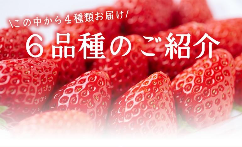 宮城県産 いちご食べ比べ
