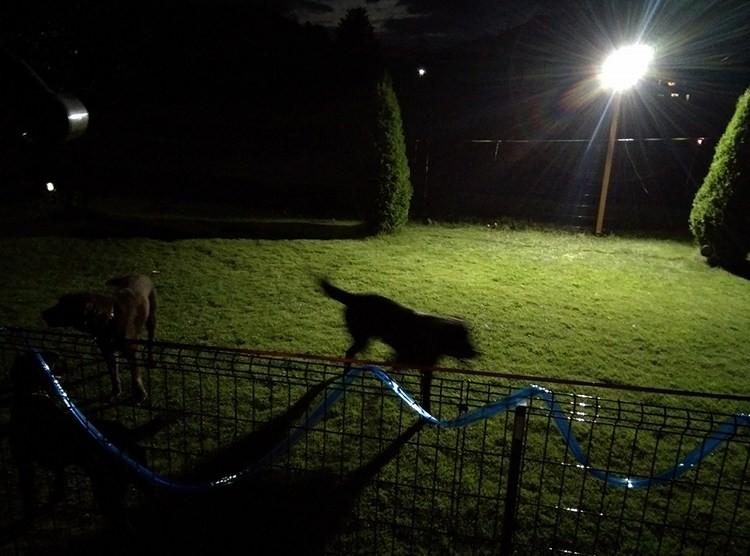 ドッグランの夜間照明として大活躍!50w投光器を設置しました