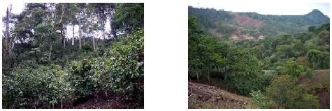 ニカラグア・ラ・コパ・カサ・ブランカ農園