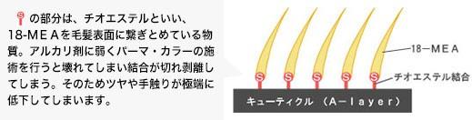 Sの部分は、チオエステルといい、18-MEAを毛髪表面に繋ぎとめている物質。アルカリ剤に弱くパーマ・カラーの施術を行うと壊れてしまい結合が切れ剥離してしまう。そのためツヤや手触りが極端に低下してしまいます。