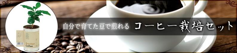 コーヒー栽培セット