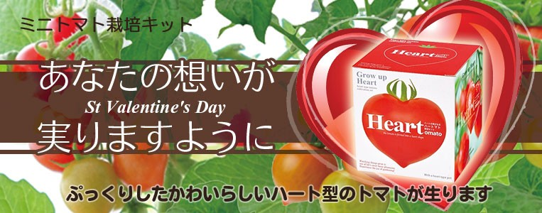 ハート トマト