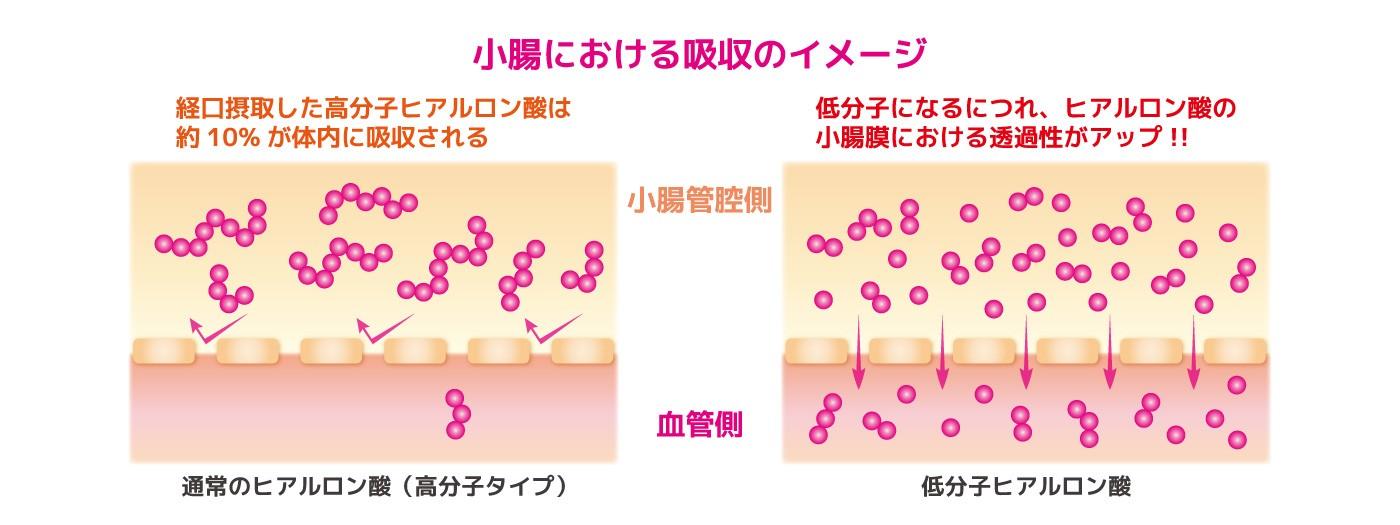 小腸における低分子ヒアルロン酸の吸収率