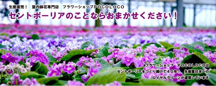 生産直売! 室内鉢花専門店 フラワーショップPOCOLOCO