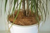 アンティーク調植木鉢,ガーデニング,植木鉢 おしゃれ 陶器