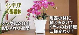 インテリア植木鉢鉢 室内,白黒,植木鉢 おしゃれ 陶器,皿付き,ガーデニング