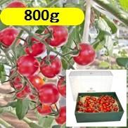 グレープトマト800g