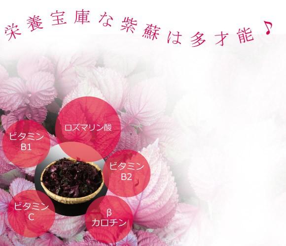 栄養宝庫な紫蘇