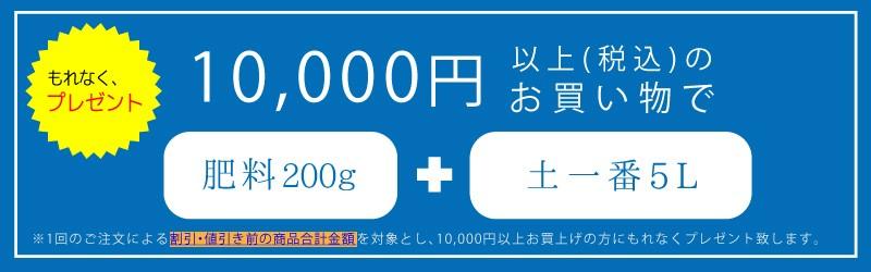 1万円買うと