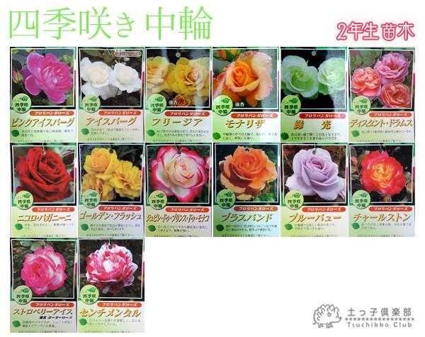 四季咲き中輪