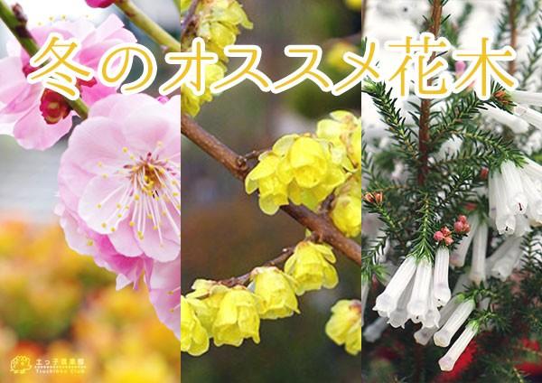 冬のオススメ花木