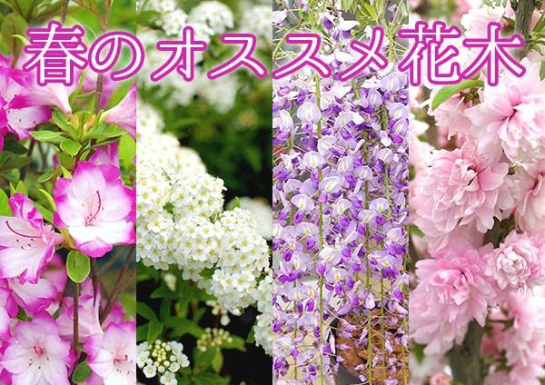 春のオススメ花木