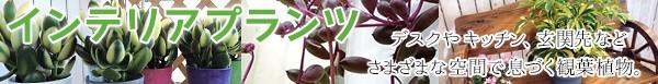 インテリアプランツ(観葉植物)