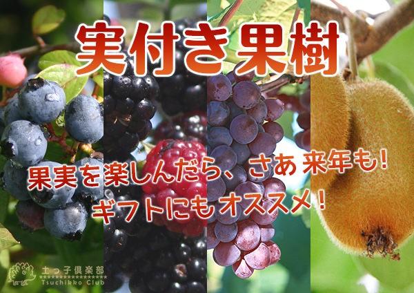 実付き果樹