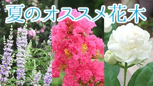 夏のオススメ花木