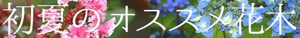 初夏のオススメ花木