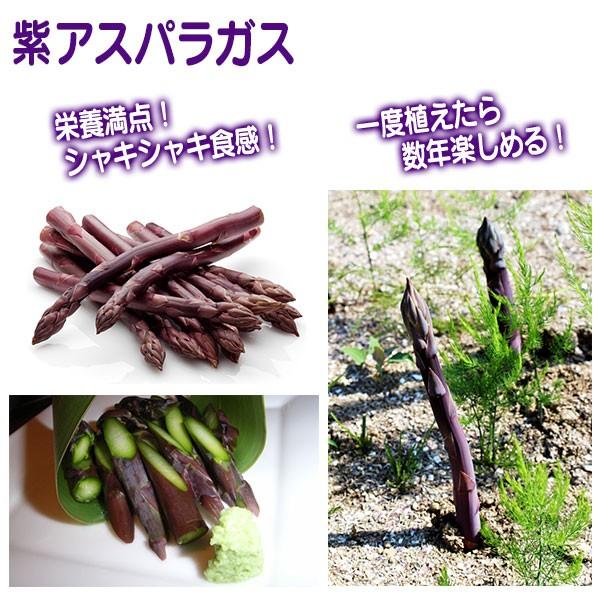 紫アスパラガス苗