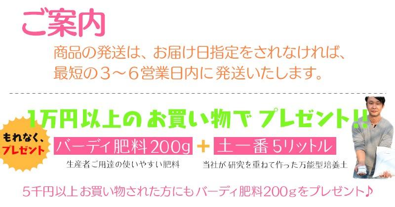 1万円以上の購入でプレゼント