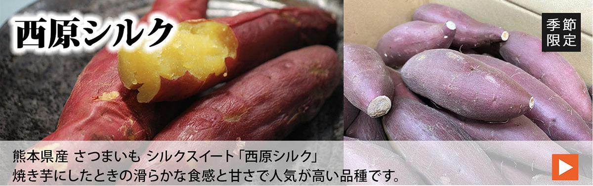 熊本県産 さつまいも シルクスイート